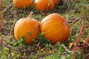 pumpkin-patch-1-1418672-m.jpg